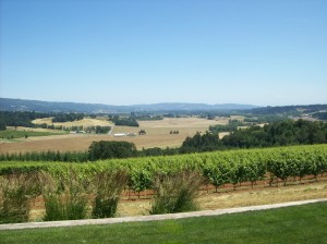 The view from Penner Ash Winery